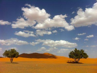 モロッコアルガンオイル